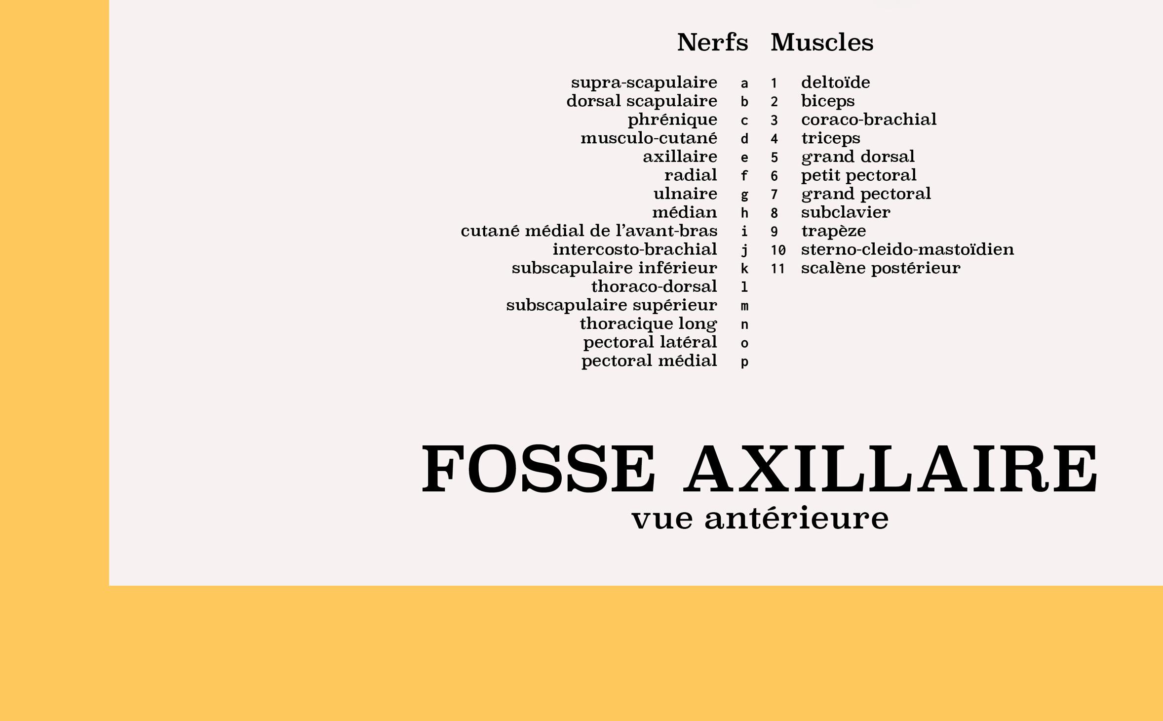 Axillary fossa, detail